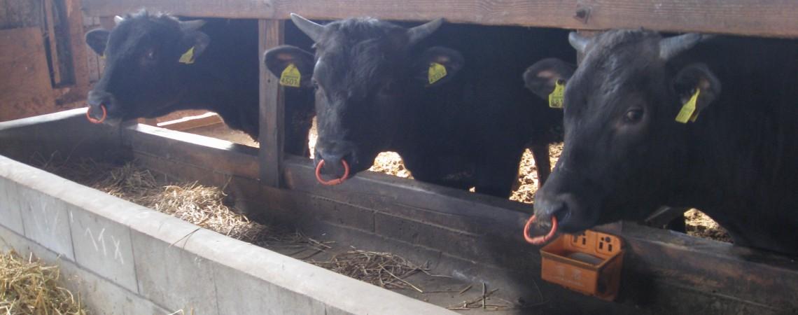 安心・安全の飼育体制